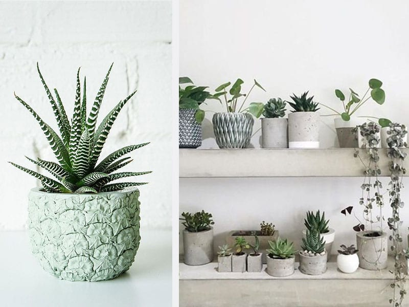 Surse foto: https://ro.pinterest.com/pin/532198880942501551/?lp=true și https://www.stylist.co.uk/life/20-on-trend-ways-to-display-house-plants-and-flowers-diy-interiors-painted-pots-hanging-planters-terrariums-succulents-air-plants