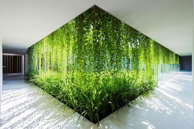Natura și calitatea vieții. Ce plante sunt bune pentru casa ta?